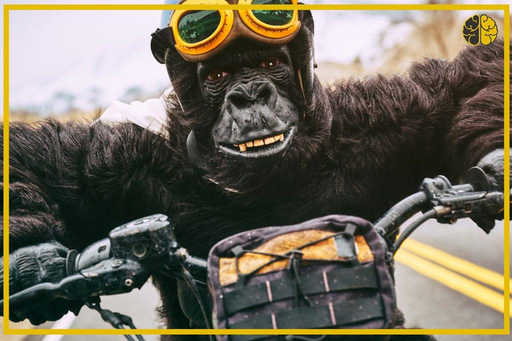 A gorilla atop a motorcycle